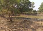 1 Acre Plot with Coconut and Mango plantation near Mand (3)