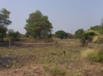1 Acre Plot with Coconut and Mango plantation near Mand (4)