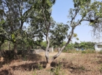Lake View 1 Acre Plot in Awas - Alibaug (1)