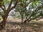 Lake View 1 Acre Plot in Awas - Alibaug (3)