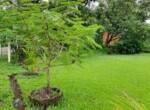 Lavish 59 Guntha property for sale - Alibaug (11)