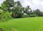 Lavish 59 Guntha property for sale - Alibaug (14)