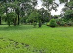 Lavish 59 Guntha property for sale - Alibaug (4)