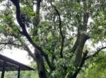 Lavish 59 Guntha property for sale - Alibaug (7)