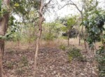 Lush Green property at excellent location Alibaug (1)