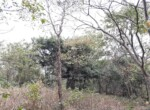 Lush Green property at excellent location Alibaug (4)