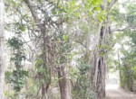 Lush Green property at excellent location Alibaug (5)