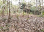 Lush Green property at excellent location Alibaug (6)