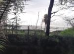 Sea Facing 16 Guntha plot with plantation at Saswane - Alibaug (3)