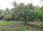 Sea Facing 16 Guntha plot with plantation at Saswane - Alibaug (4)