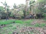 Sea Facing 16 Guntha plot with plantation at Saswane - Alibaug (5)