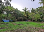 Sea Facing 16 Guntha plot with plantation at Saswane - Alibaug (6)