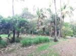 Sea Facing 16 Guntha plot with plantation at Saswane - Alibaug (7)