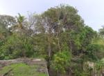 Sea Facing 16 Guntha plot with plantation at Saswane - Alibaug (8)