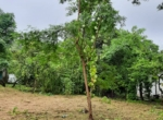 10 guntha land at Zirad- Alibaug, very near from Mandwa- (5)