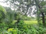 13.2 Guntha Land for sale in Sasawane, Alibaug. (15)