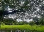 13.2 Guntha Land for sale in Sasawane, Alibaug. (18)