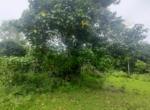 15 Guntha Farm at Dhokawade, Alibaug (10)