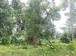15 Guntha Farm at Dhokawade, Alibaug (11)