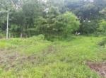 15 Guntha Farm at Dhokawade, Alibaug (12)
