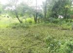 15 Guntha Farm at Dhokawade, Alibaug (2)