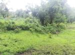 15 Guntha Farm at Dhokawade, Alibaug (4)