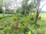 15 Guntha Farm at Dhokawade, Alibaug (5)