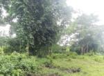 15 Guntha Farm at Dhokawade, Alibaug (6)