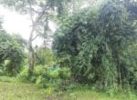 15 Guntha Farm at Dhokawade, Alibaug (7)