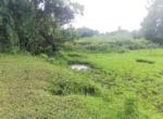 15 Guntha Farm at Dhokawade, Alibaug (8)