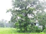 16 Guntha farm at Kankeshwar Fata (4)