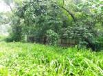 16 Guntha farm at Kankeshwar Fata (5)