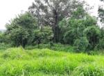Lush Green 56 Guntha farm available in Awas - Alibaug (1)