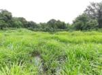 Lush Green 56 Guntha farm available in Awas - Alibaug (3)