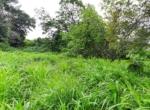 Lush Green 56 Guntha farm available in Awas - Alibaug (4)