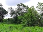 Lush Green 56 Guntha farm available in Awas - Alibaug (5)